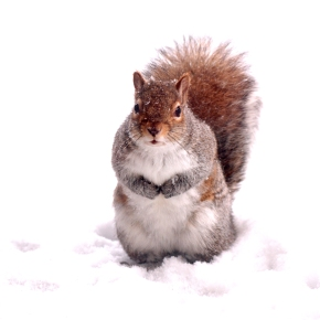 Squirrelling Away For Winter